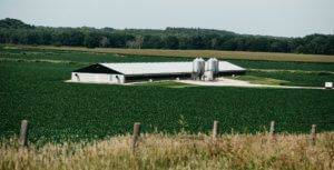 A black and white pig barn with four feed bins surrounded by green corn fields